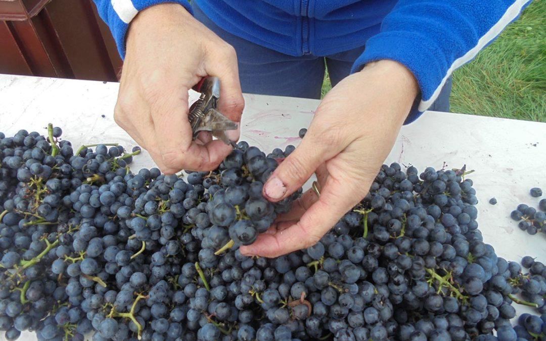 Mooie prijzen voor onze wijnen